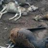 Morte de animais assusta moradores da zona rural de Feira
