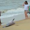 Prado: Golfinho é encontrado morto na praia do centro