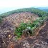 Governo brasileiro abriu mão de combater desmatamento, diz Greenpeace