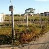 Juiz Marcus Aurelius analisa caso e suspende ação de reintegração na área da Grendene