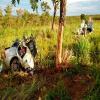 Família bate o carro em árvore e parte ao meio; mãe e filhos morrem