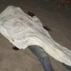 VIOLÊNCIA: Jovem é assassinado a facadas nas casinhas populares em Itabatã