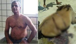 Edvaldo Andrade de Souza, de 46 anos, desferiu vários golpes de facão nos animais, no qual uma égua não resistiu e morreu